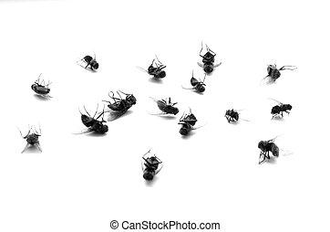 Dead Flies in a Pile