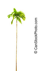 palm tree - A photography of a curved isolated palm tree