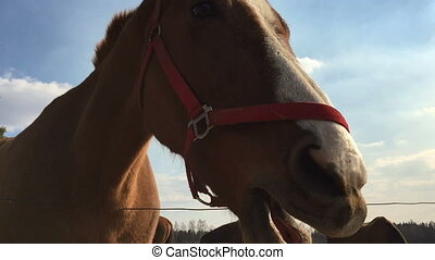 Horse chews food against the blue sky Close up video