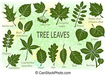 Leaves of Plants Pictogram Set - Pictograms Tree Leaves,...
