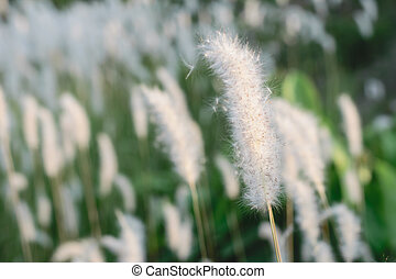 Beautiful of white grass and green grass with color of...