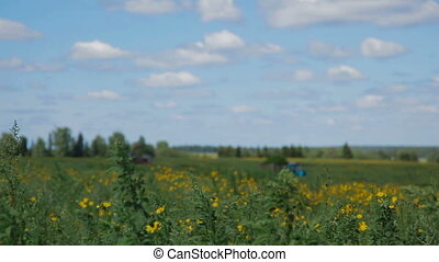 Tractor in field Russia - farmer combain and tractor trailer...