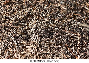 mrówki, w, na, mrowisko,
