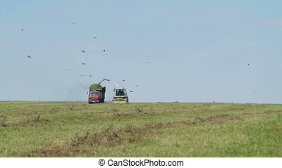 Farmer Combain harvesting in field - farmer combain and...