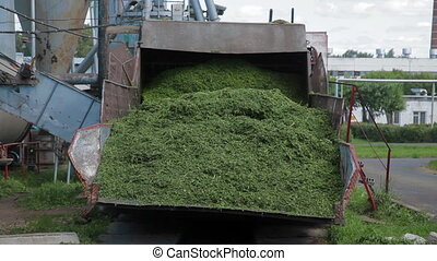 Herbal feed production for poultry from grass - Herbal feed...