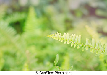 Leaves of green fern - Closeup leaves of green fern with...