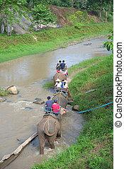 Group tourists ride elephant