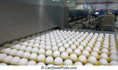 Eggs sorting in the factory - Transportation and industrial...
