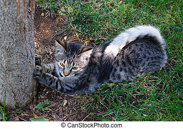 Spotted Kitten - This spotted kitten displays...