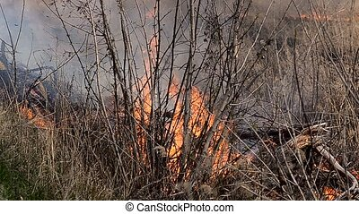 Fires due to the flammable dry grass - Severe fires due to...