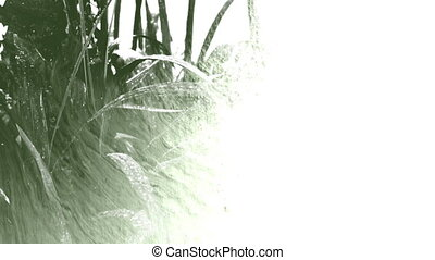 Plant under rain, droplets, ink - Closeup on a plant under...