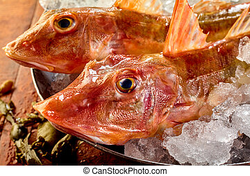 Heads of two raw fresh gurnard fish - Heads of two raw fresh...
