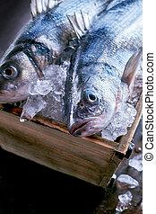 Fresh whole raw Mediterranean sea bass or Loup de Mer kept...
