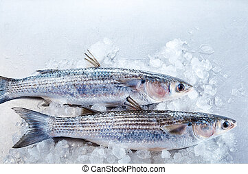 Pair of mullet fish in ice with copy space