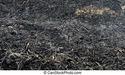 The ash after the fire