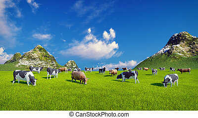 Dairy cows on green alpine pasture - Herd of dairy cows...