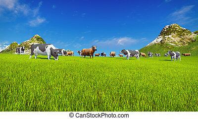 Dairy cows graze on alpine meadow - Herd of dairy cows graze...