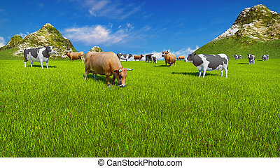 Dairy cows on alpine pasture Close up - Dairy cows graze on...