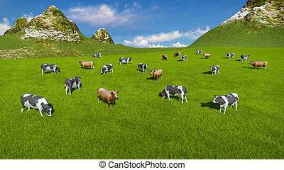 Herd of cows on alpine pasture Aerial view - Aerial view of...