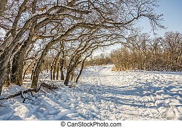 inverno, pomeriggio