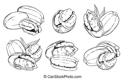 Bitmap pecan on white background. Isolated nuts. - Pecan on...