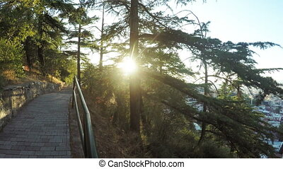 Path between pines in park - Stairs to chamber of Tbilisi on...