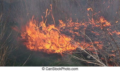 dry straw burning. Close up - Ignition of dry grass in the...