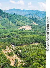 View from the hill with oil palm plantation