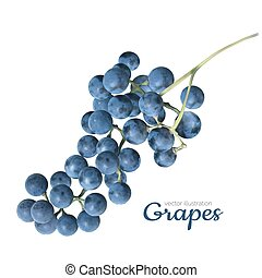 vector realistic grapes on a white