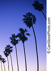 California - Sunset along the Coast Blvd. in Ellen Browning...