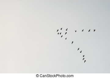Flock of migrating birds silhouette against sky