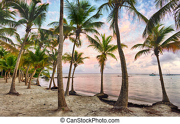 Anse Chamapgne - Sunset over Anse Champagne beach in Saint...