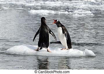 Gentoo Penguins on the ice in Antarctica