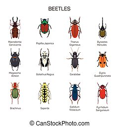 Bugs vector set in flat style design. Different kind of beetles insect species icons collection.