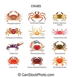 Crabs vector set in flat style design. Different kind of...