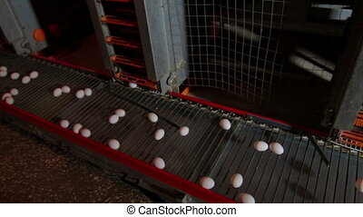 Eggs moving on the conveyer in factory - Transportation and...
