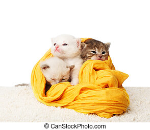 Cute kittens in yellow cotton isolated - White and grey...
