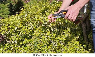 Gardening-cutting a plant - Closeup view of a female hand...