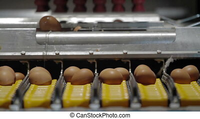 Eggs automated sorting in factory - Transportation and...