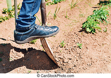 young farmer man digging in an organic orchard
