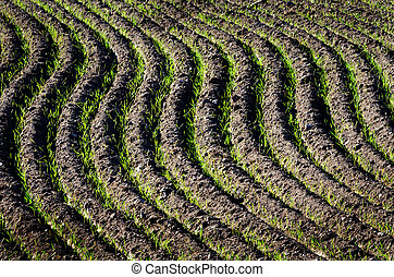 Rows of Furrows in Field - Rows of furrows for crops growing...