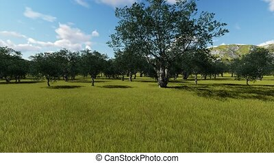 Idyllic Tuscan rural landscape with olives trees, Animation...