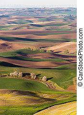 Palouse Region Steptoe Butte Farmland Rolling Hills...