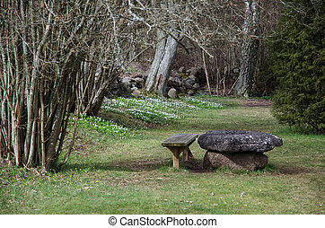 Beautiful resting place at spring - Springtime with blossom...