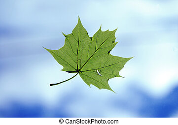 Leaf flying in air