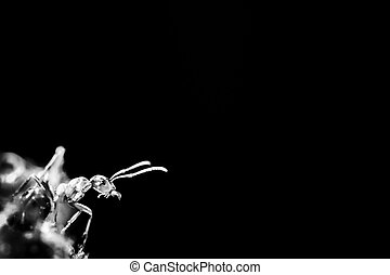silhouette of ant on a black background
