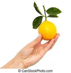 lemon in hand on white background