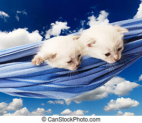 Cute white kittens in hammock isolated at blue sky - Two...