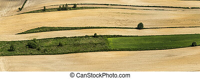 aerial of field in golden color after harvest
