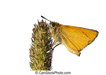 Yellow butterfly on white, clipping path - Yellow butterfly...